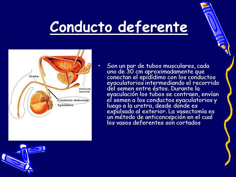 Enfermedades de transmisión sexual Gonorrea: es una bacteria que ocasiona infecciones, esterilidad y dolores en el pene e ingles en el hombre, e inflamación pélvica en la mujer.
