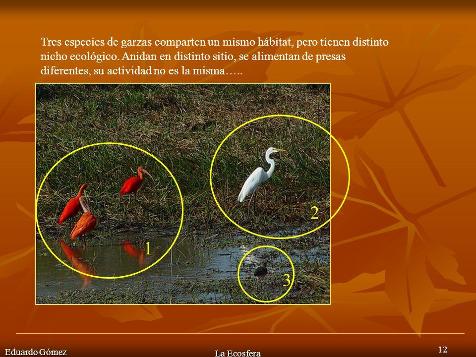 Eduardo Gómez La Ecosfera 12 Tres especies de garzas comparten un mismo hábitat, pero tienen distinto nicho ecológico. Anidan en distinto sitio, se al