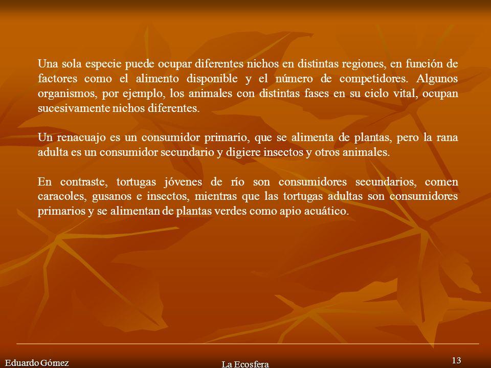 Eduardo Gómez La Ecosfera 13 Una sola especie puede ocupar diferentes nichos en distintas regiones, en función de factores como el alimento disponible