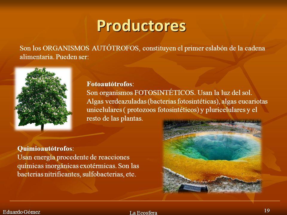 Productores Eduardo Gómez La Ecosfera 19 Son los ORGANISMOS AUTÓTROFOS, constituyen el primer eslabón de la cadena alimentaria. Pueden ser: Fotoautótr