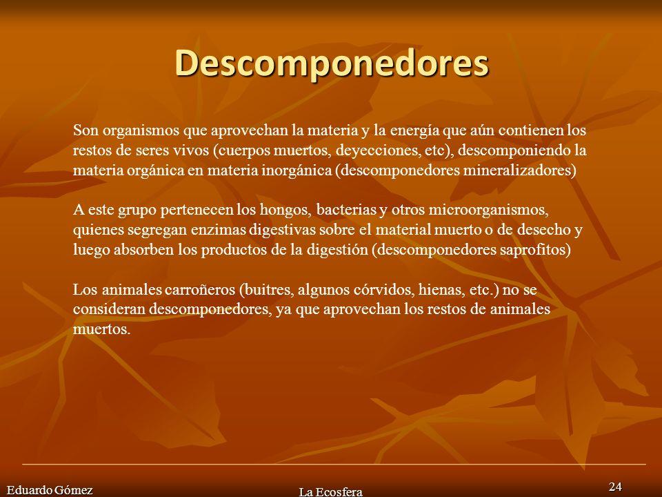 Descomponedores Eduardo Gómez La Ecosfera 24 Son organismos que aprovechan la materia y la energía que aún contienen los restos de seres vivos (cuerpo