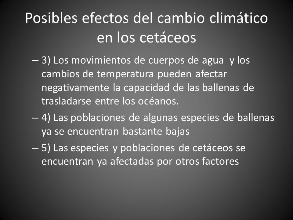 – 3) Los movimientos de cuerpos de agua y los cambios de temperatura pueden afectar negativamente la capacidad de las ballenas de trasladarse entre lo