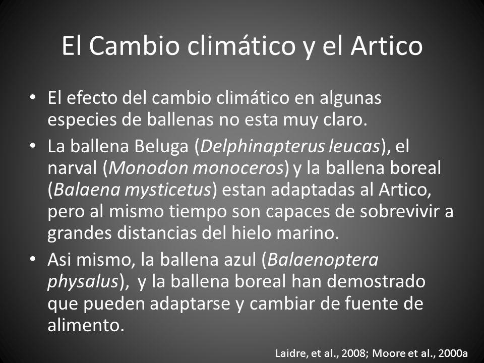 El efecto del cambio climático en algunas especies de ballenas no esta muy claro. La ballena Beluga (Delphinapterus leucas), el narval (Monodon monoce