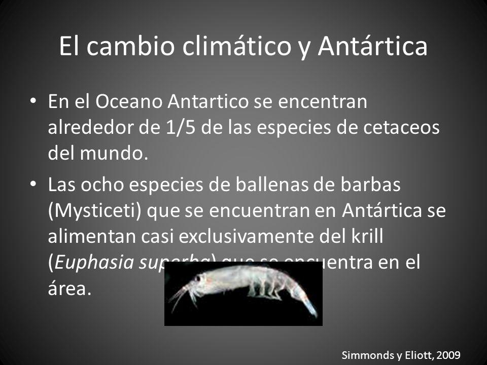 El cambio climático y Antártica En el Oceano Antartico se encentran alrededor de 1/5 de las especies de cetaceos del mundo. Las ocho especies de balle