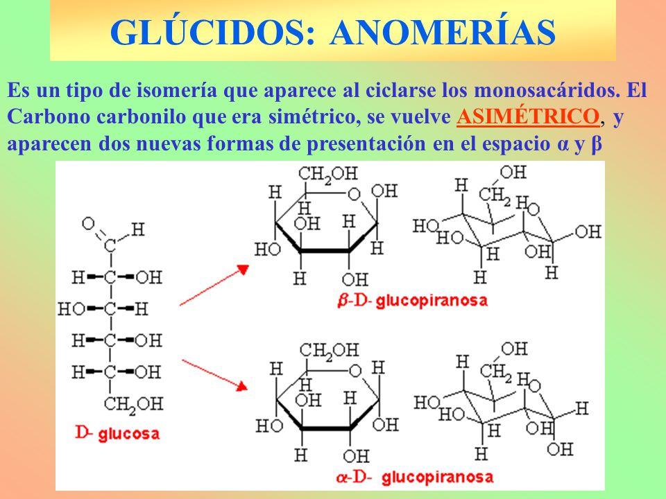 GLÚCIDOS: ANOMERÍAS Es un tipo de isomería que aparece al ciclarse los monosacáridos. El Carbono carbonilo que era simétrico, se vuelve ASIMÉTRICO, y