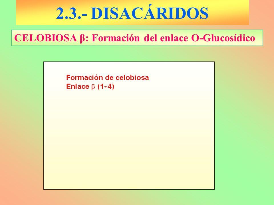 2.3.- DISACÁRIDOS CELOBIOSA β: Formación del enlace O-Glucosídico