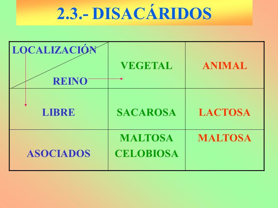 2.3.- DISACÁRIDOS LOCALIZACIÓN REINO VEGETALANIMAL LIBRESACAROSALACTOSA ASOCIADOS MALTOSA CELOBIOSA MALTOSA