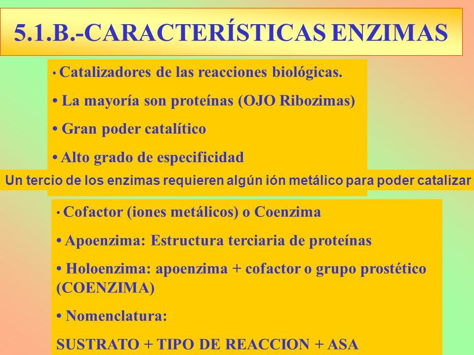 Cofactor (iones metálicos) o Coenzima Apoenzima: Estructura terciaria de proteínas Holoenzima: apoenzima + cofactor o grupo prostético (COENZIMA) Nome