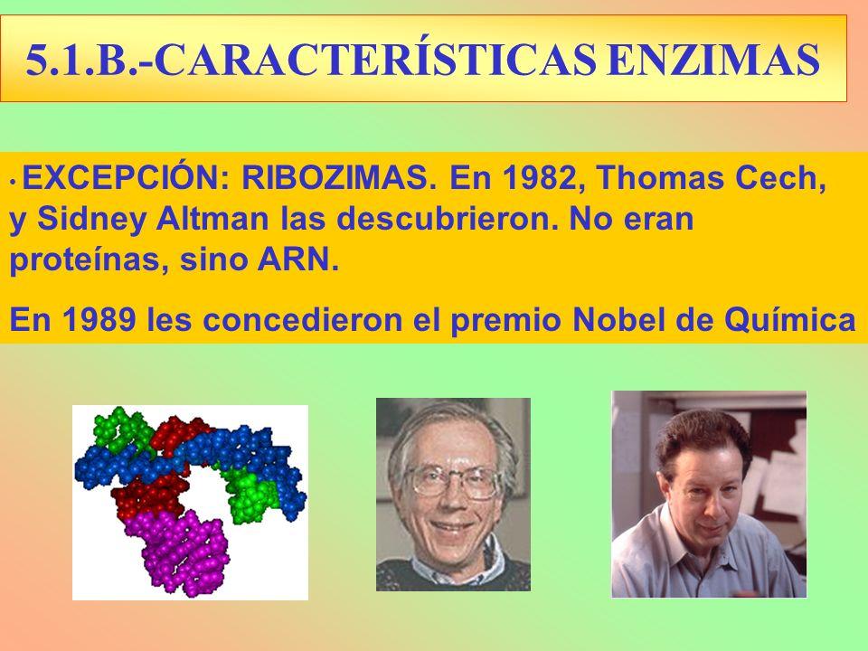 EXCEPCIÓN: RIBOZIMAS. En 1982, Thomas Cech, y Sidney Altman las descubrieron. No eran proteínas, sino ARN. En 1989 les concedieron el premio Nobel de