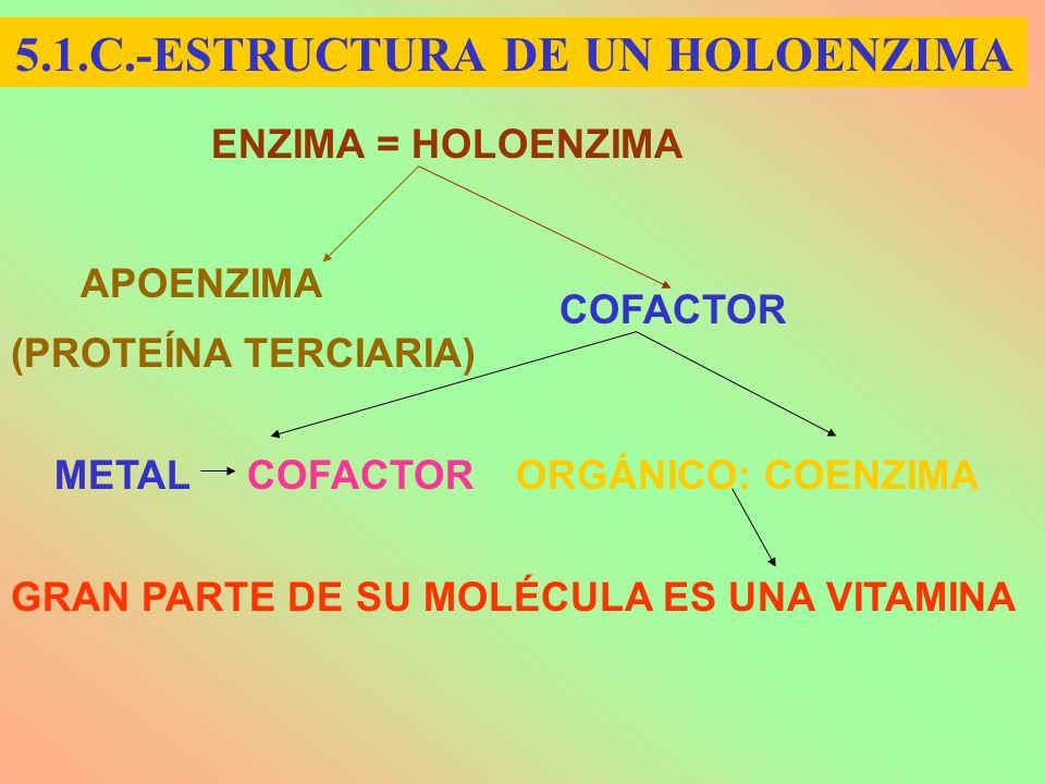 ENZIMA = HOLOENZIMA APOENZIMA COFACTOR METAL COFACTORORGÁNICO: COENZIMA GRAN PARTE DE SU MOLÉCULA ES UNA VITAMINA (PROTEÍNA TERCIARIA) 5.1.C.-ESTRUCTU