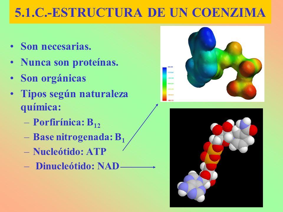 5.1.C.-ESTRUCTURA DE UN COENZIMA Son necesarias. Nunca son proteínas. Son orgánicas Tipos según naturaleza química: –Porfirínica: B 12 –Base nitrogena