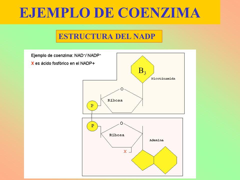 EJEMPLO DE COENZIMA ESTRUCTURA DEL NADP B3B3