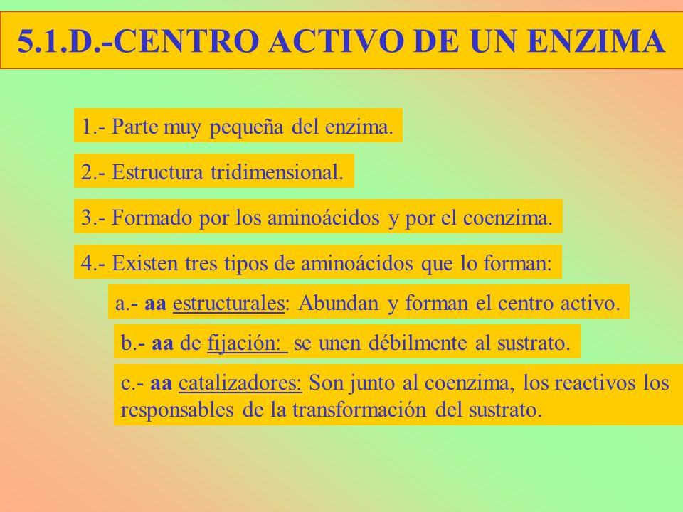 5.1.D.-CENTRO ACTIVO DE UN ENZIMA 1.- Parte muy pequeña del enzima. 2.- Estructura tridimensional. 3.- Formado por los aminoácidos y por el coenzima.