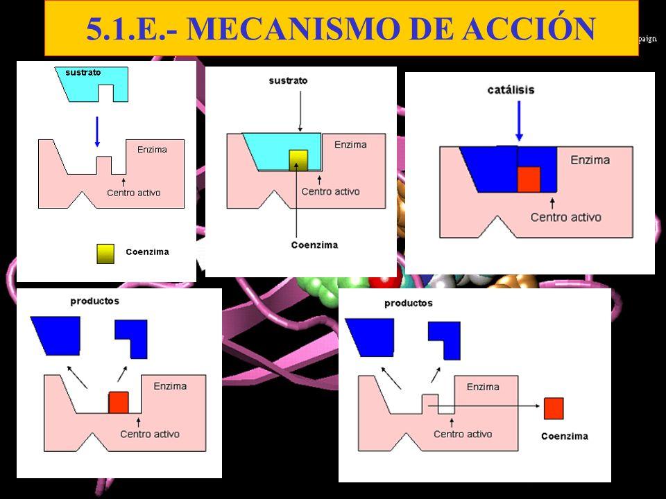 5.1.E.- MECANISMO DE ACCIÓN