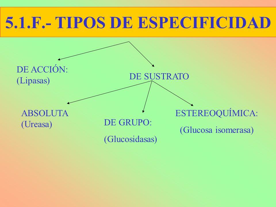 5.1.F.- TIPOS DE ESPECIFICIDAD DE ACCIÓN: (Lipasas) ESTEREOQUÍMICA: (Glucosa isomerasa) ABSOLUTA (Ureasa) DE GRUPO: (Glucosidasas) DE SUSTRATO