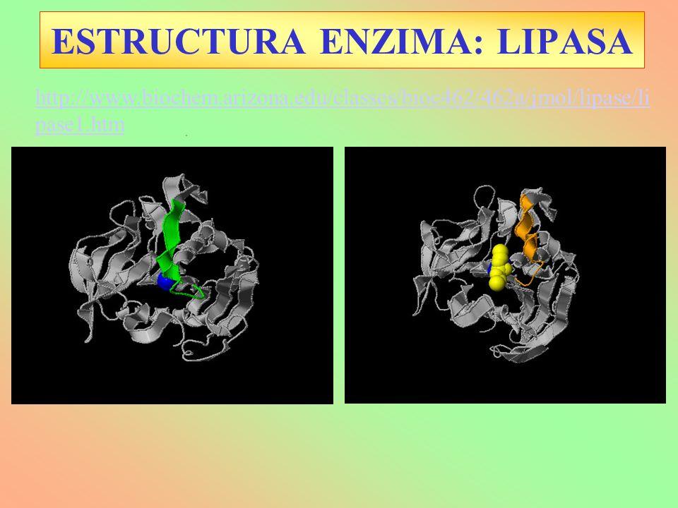 http://www.biochem.arizona.edu/classes/bioc462/462a/jmol/lipase/li pase1.htm