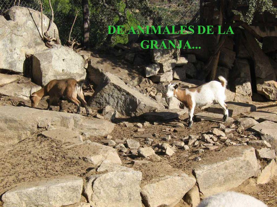 DE ANIMALES DE LA GRANJA...