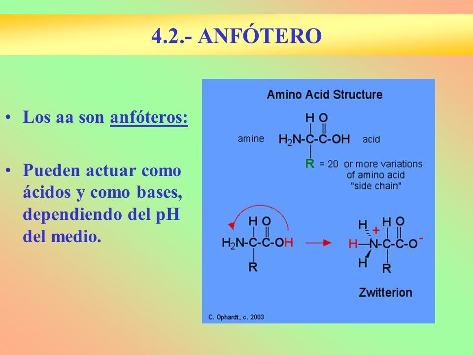 Los aa son anfóteros: Pueden actuar como ácidos y como bases, dependiendo del pH del medio. 4.2.- ANFÓTERO