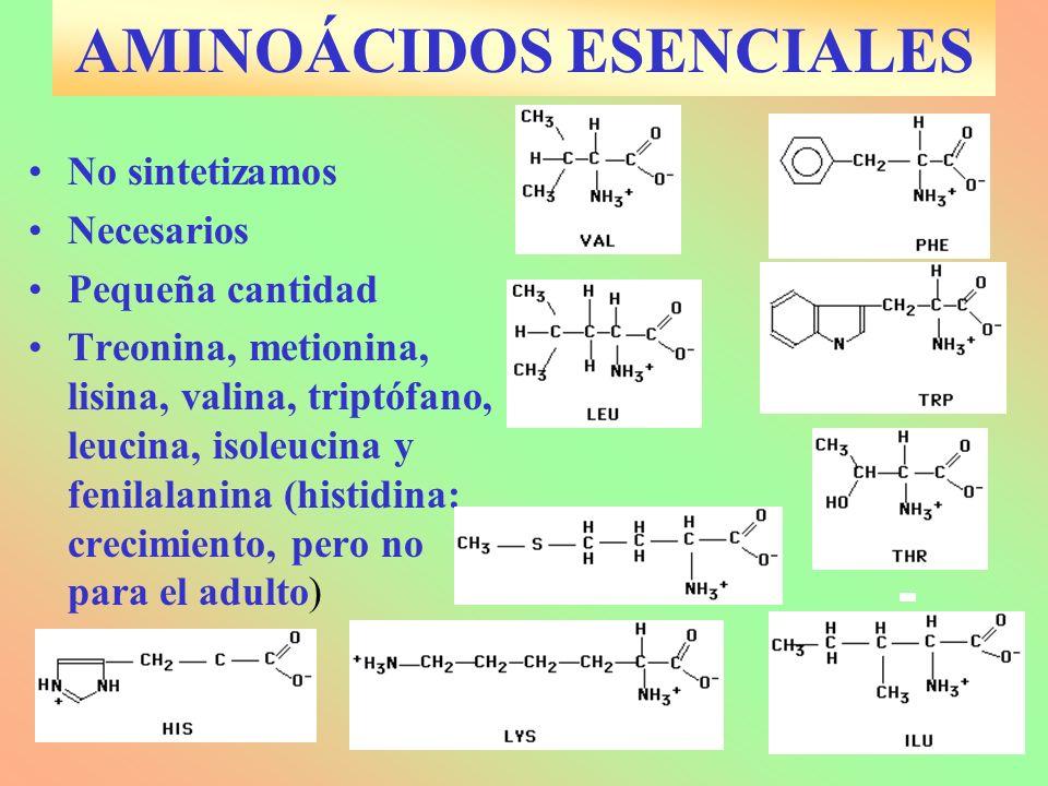 AMINOÁCIDOS ESENCIALES No sintetizamos Necesarios Pequeña cantidad Treonina, metionina, lisina, valina, triptófano, leucina, isoleucina y fenilalanina