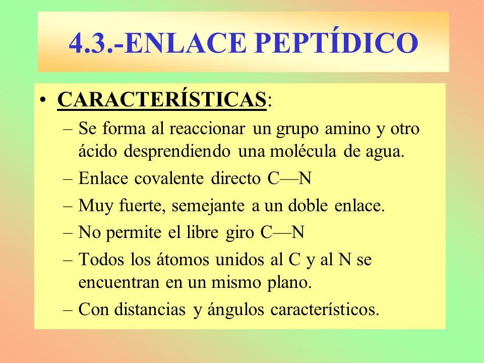 CARACTERÍSTICAS: –Se forma al reaccionar un grupo amino y otro ácido desprendiendo una molécula de agua. –Enlace covalente directo CN –Muy fuerte, sem