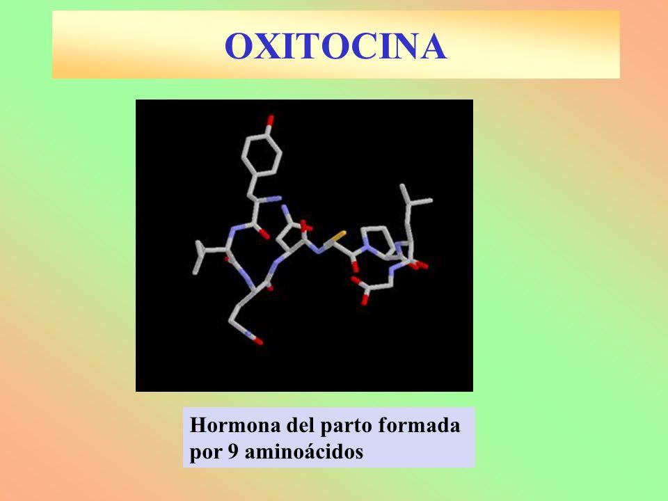 OXITOCINA Hormona del parto formada por 9 aminoácidos