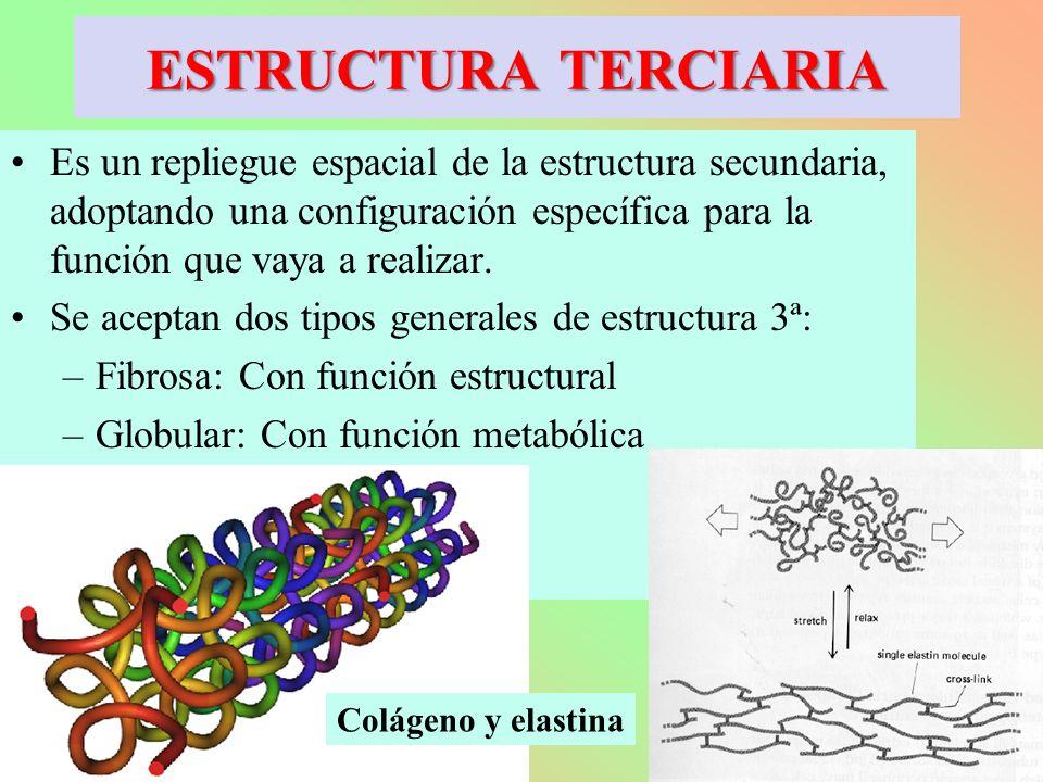 Es un repliegue espacial de la estructura secundaria, adoptando una configuración específica para la función que vaya a realizar. Se aceptan dos tipos