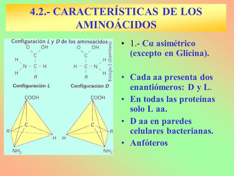 1.- Cα asimétrico (excepto en Glicina). Cada aa presenta dos enantiómeros: D y L. En todas las proteínas solo L aa. D aa en paredes celulares bacteria