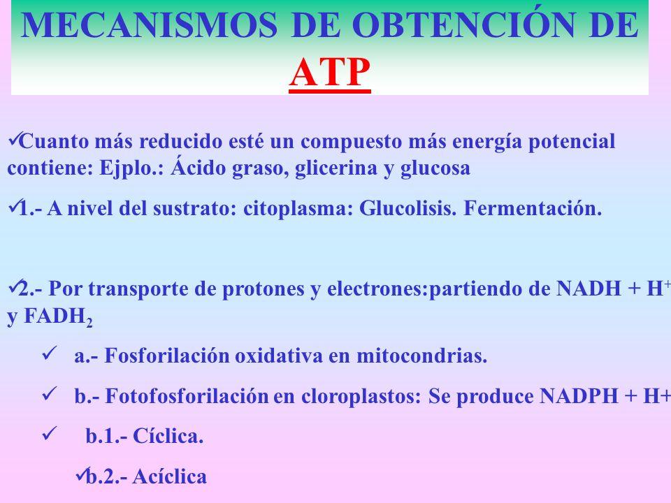 MECANISMOS DE OBTENCIÓN DE ATP Cuanto más reducido esté un compuesto más energía potencial contiene: Ejplo.: Ácido graso, glicerina y glucosa 1.- A ni