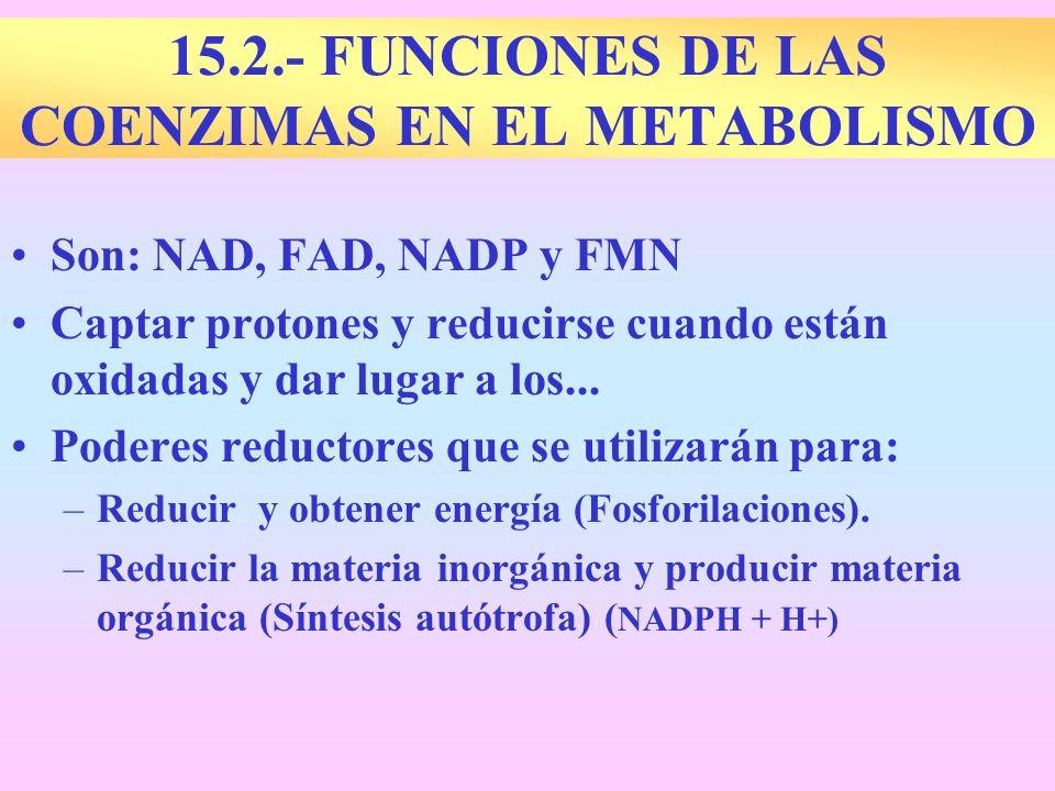 15.2.- FUNCIONES DE LAS COENZIMAS EN EL METABOLISMO Son: NAD, FAD, NADP y FMN Captar protones y reducirse cuando están oxidadas y dar lugar a los... P