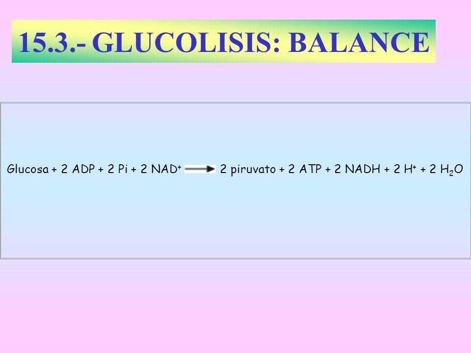 15.3.- GLUCOLISIS: BALANCE Glucosa + 2 ADP + 2 Pi + 2 NAD + 2 piruvato + 2 ATP + 2 NADH + 2 H + + 2 H 2 O