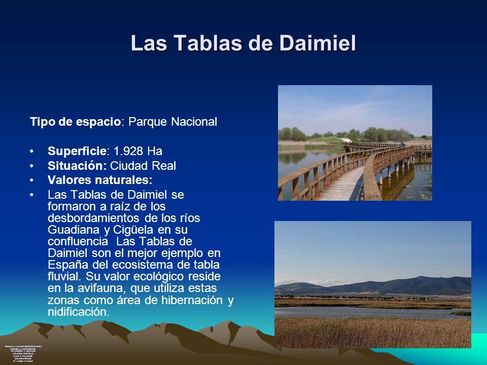 Las Tablas de Daimiel Tipo de espacio: Parque Nacional Superficie: 1.928 Ha Situación: Ciudad Real Valores naturales: Las Tablas de Daimiel se formaro