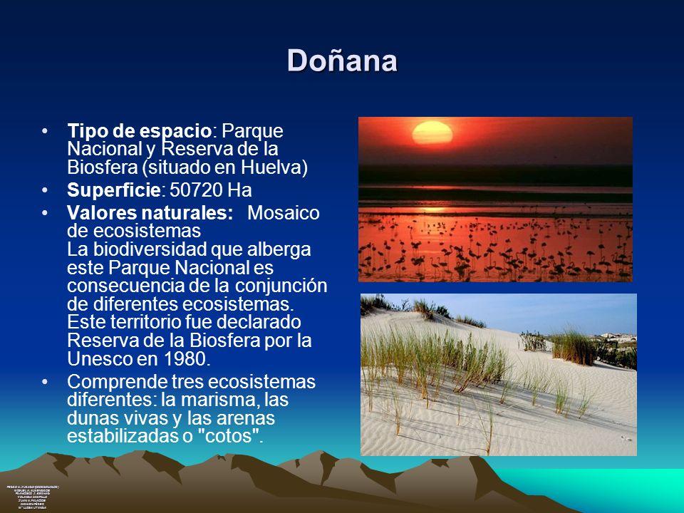 Doñana Tipo de espacio: Parque Nacional y Reserva de la Biosfera (situado en Huelva) Superficie: 50720 Ha Valores naturales: Mosaico de ecosistemas La