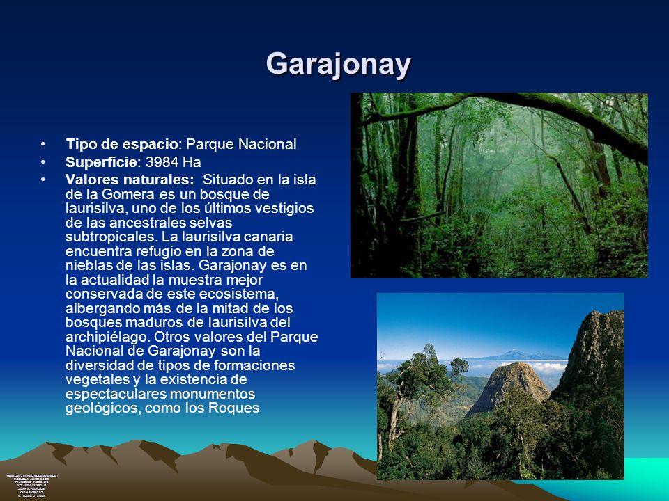 Garajonay Garajonay Tipo de espacio: Parque Nacional Superficie: 3984 Ha Valores naturales: Situado en la isla de la Gomera es un bosque de laurisilva