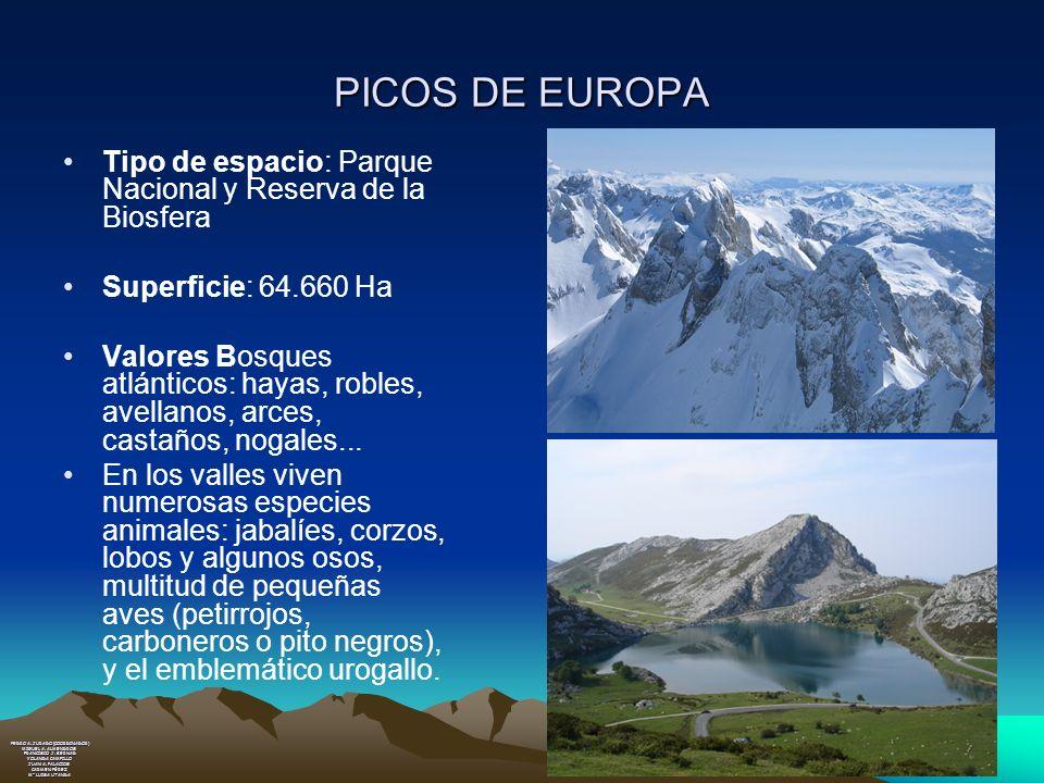 PICOS DE EUROPA Tipo de espacio: Parque Nacional y Reserva de la Biosfera Superficie: 64.660 Ha Valores Bosques atlánticos: hayas, robles, avellanos,