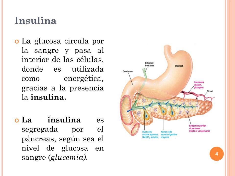 4 Insulina La glucosa circula por la sangre y pasa al interior de las células, donde es utilizada como energética, gracias a la presencia la insulina.
