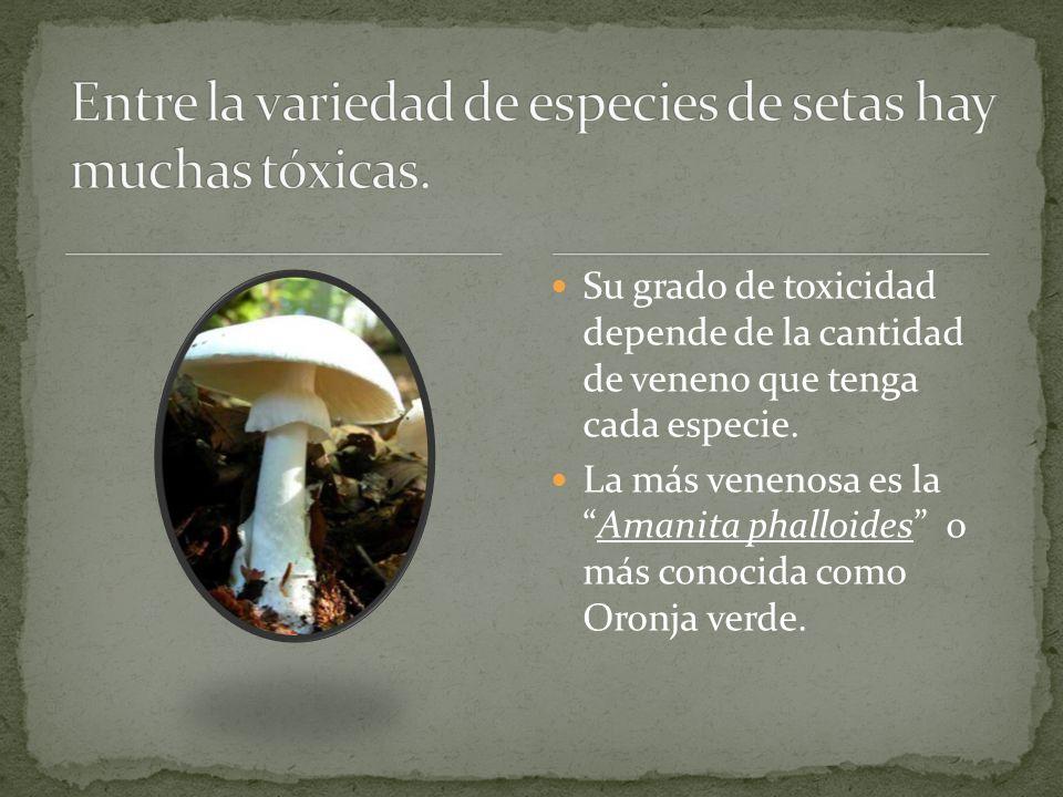 Su grado de toxicidad depende de la cantidad de veneno que tenga cada especie.
