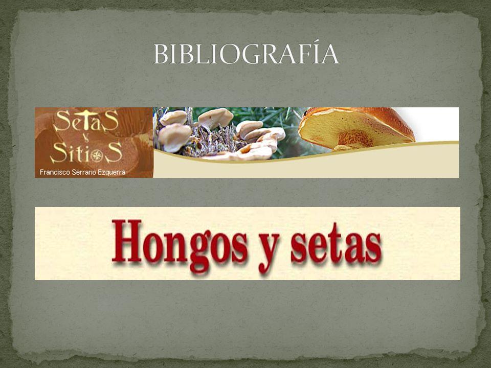 Calocybe gambosa Más conocida como SETA DE SAN JORGE.