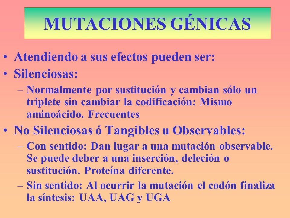 MUTACIONES GÉNICAS Atendiendo a sus efectos pueden ser: Silenciosas: –Normalmente por sustitución y cambian sólo un triplete sin cambiar la codificaci