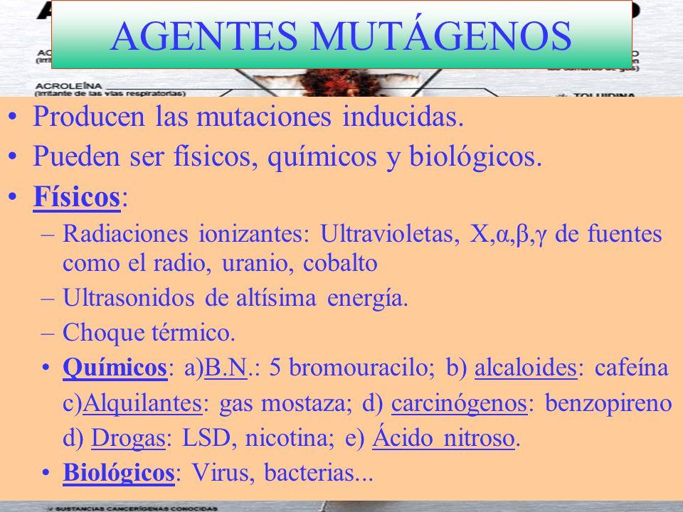 AGENTES MUTÁGENOS Producen las mutaciones inducidas. Pueden ser físicos, químicos y biológicos. Físicos: –Radiaciones ionizantes: Ultravioletas, X,α,β