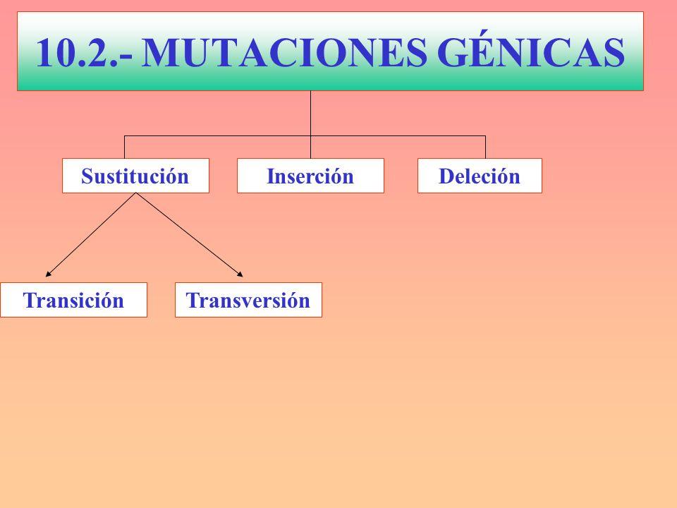 MUTACIONES GÉNICAS Mutación en el aminoácido 6 de la cadena β que cambia glutámico por valina.