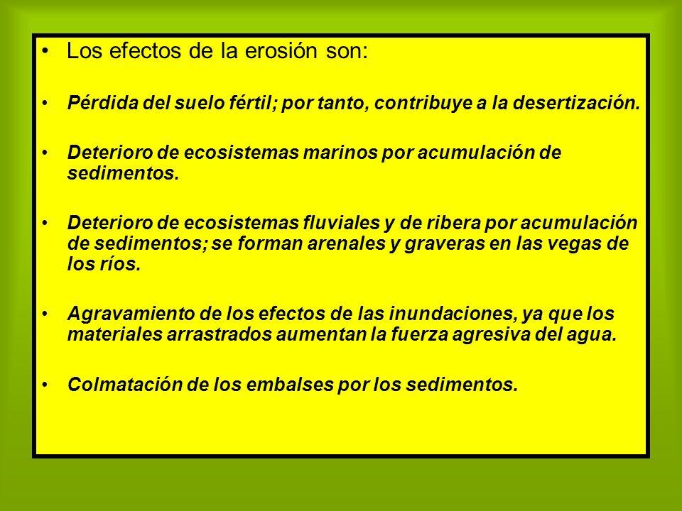 Los efectos de la erosión son: Pérdida del suelo fértil; por tanto, contribuye a la desertización. Deterioro de ecosistemas marinos por acumulación de