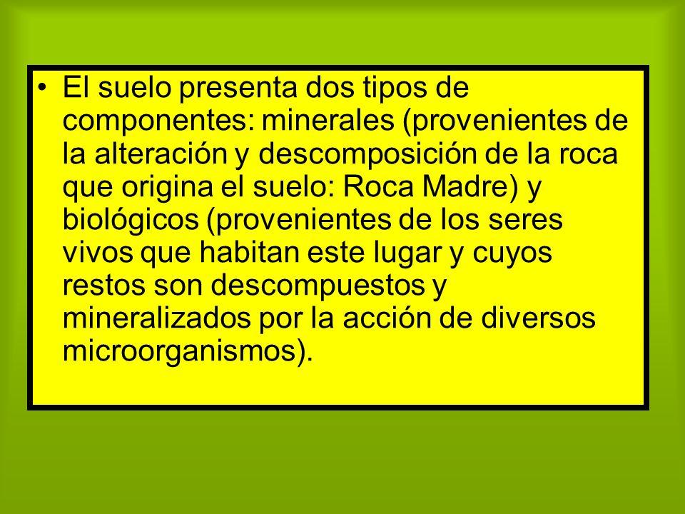 El suelo presenta dos tipos de componentes: minerales (provenientes de la alteración y descomposición de la roca que origina el suelo: Roca Madre) y b