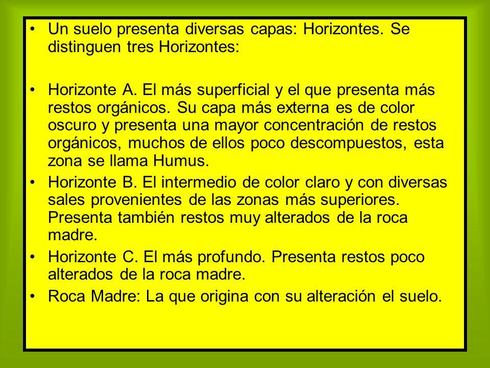 Un suelo presenta diversas capas: Horizontes. Se distinguen tres Horizontes: Horizonte A. El más superficial y el que presenta más restos orgánicos. S