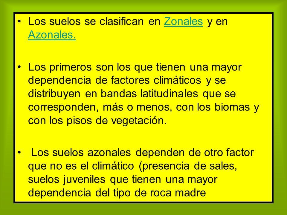 Los suelos se clasifican en Zonales y en Azonales.Zonales Azonales. Los primeros son los que tienen una mayor dependencia de factores climáticos y se