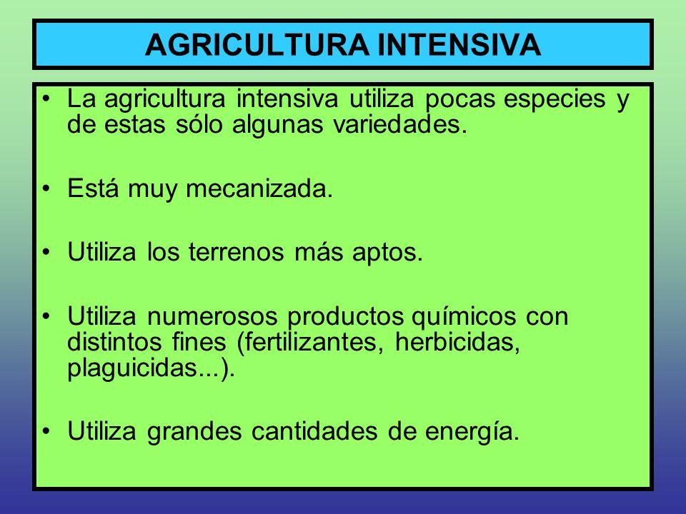 AGRICULTURA INTENSIVA La agricultura intensiva utiliza pocas especies y de estas sólo algunas variedades. Está muy mecanizada. Utiliza los terrenos má