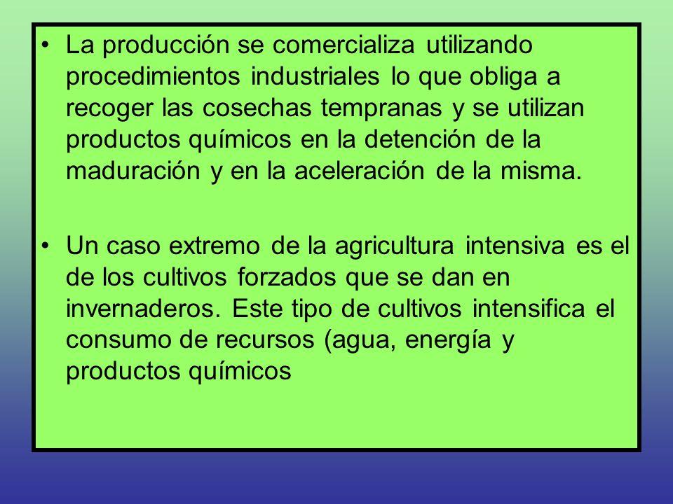 La producción se comercializa utilizando procedimientos industriales lo que obliga a recoger las cosechas tempranas y se utilizan productos químicos e
