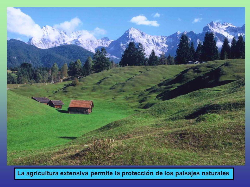 La agricultura extensiva permite la protección de los paisajes naturales