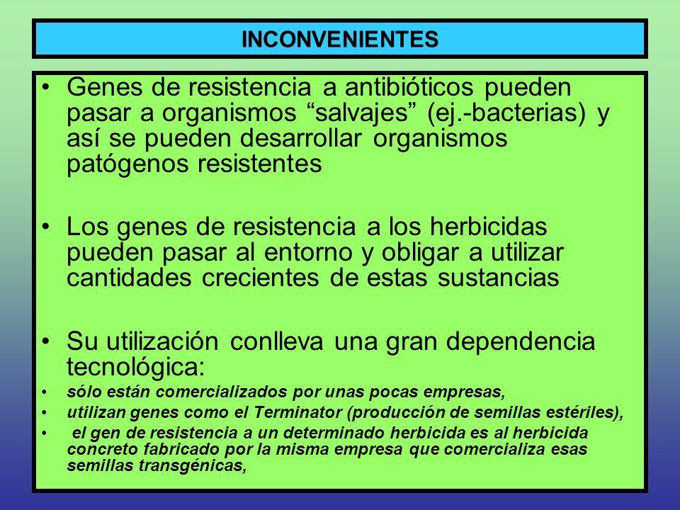INCONVENIENTES Genes de resistencia a antibióticos pueden pasar a organismos salvajes (ej.-bacterias) y así se pueden desarrollar organismos patógenos