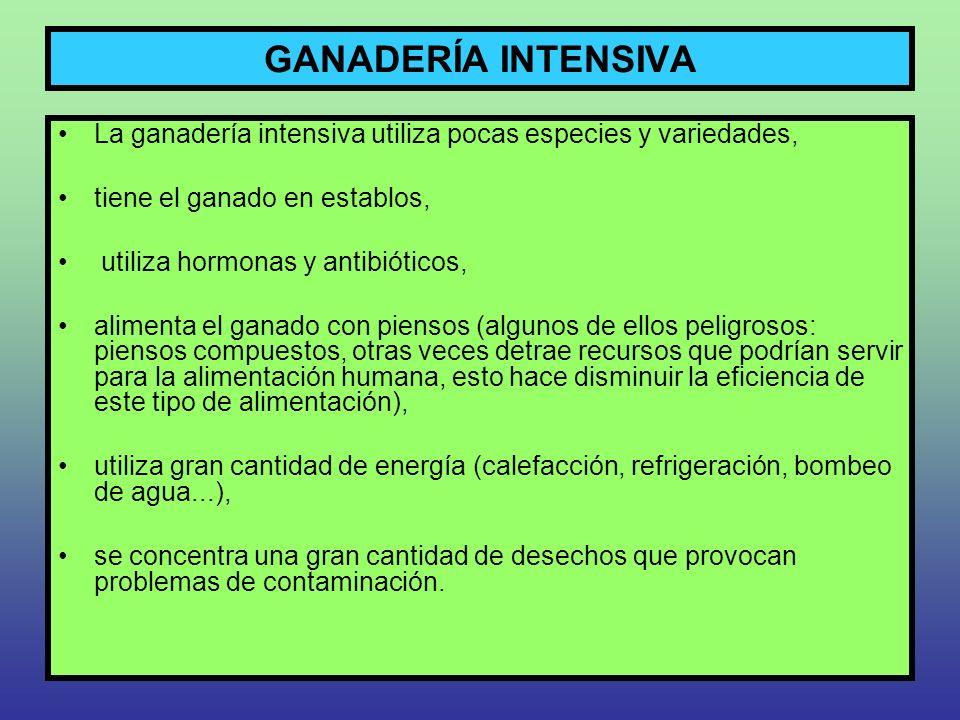 GANADERÍA INTENSIVA La ganadería intensiva utiliza pocas especies y variedades, tiene el ganado en establos, utiliza hormonas y antibióticos, alimenta