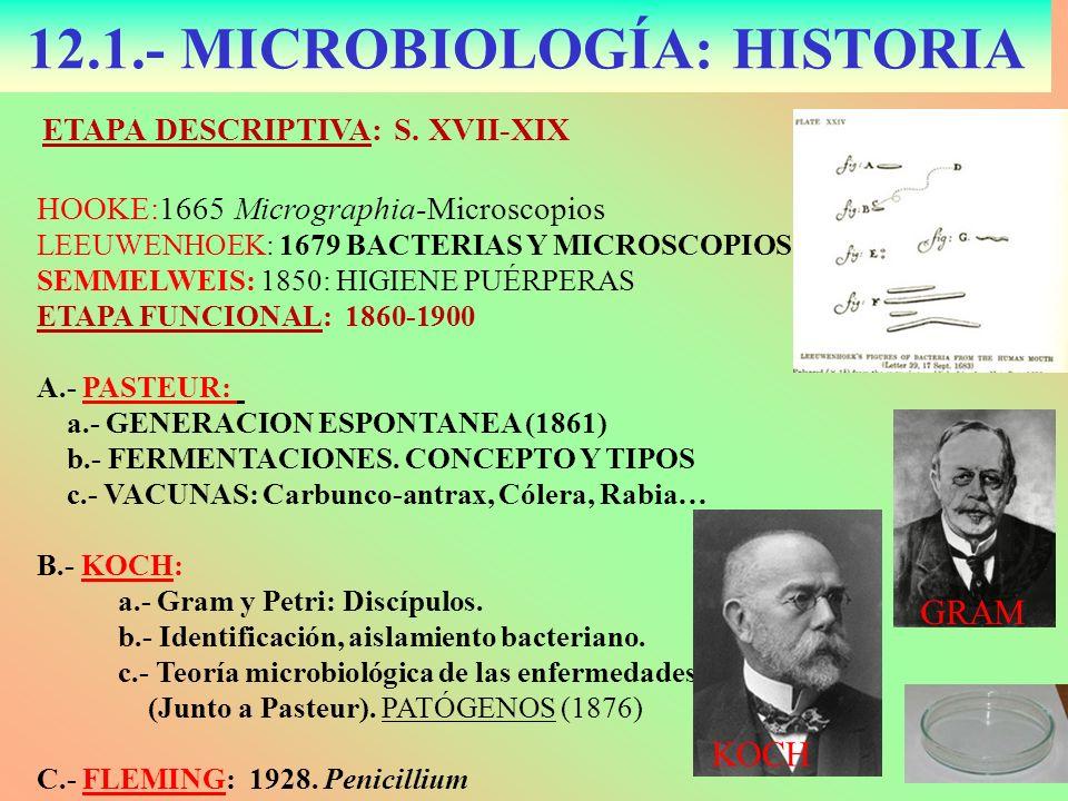 12.1.- MICROBIOLOGÍA: HISTORIA ETAPA DESCRIPTIVA: S. XVII-XIX HOOKE:1665 Micrographia-Microscopios LEEUWENHOEK: 1679 BACTERIAS Y MICROSCOPIOS SEMMELWE